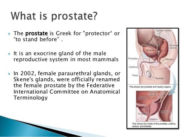 Prostatomegaly