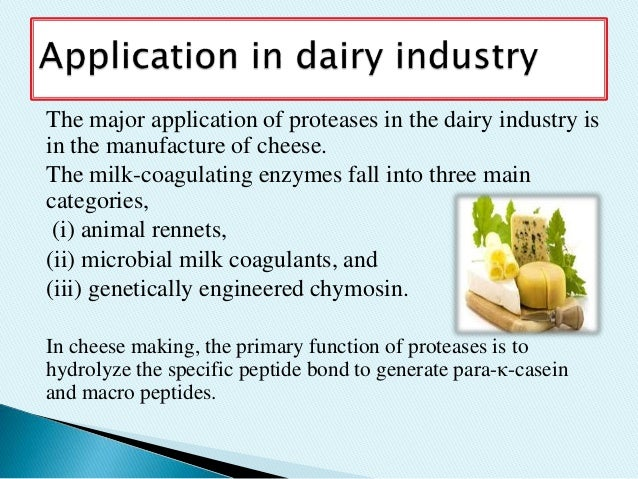 application of enzyme to dairy industries Enzymes in the dairy industry by alyssa tolton  the enzyme protease, which is a coagulant, is added to the milk of the cattle to hydrolyze caseins (protein) which .