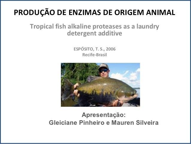 PRODUÇÃO DE ENZIMAS DE ORIGEM ANIMAL   Tropical fish alkaline proteases as a laundry                 detergent additive   ...