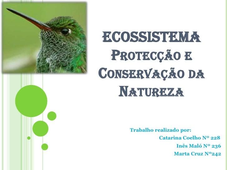 ECOSSISTEMAProtecção e Conservação da Natureza<br />Trabalho realizado por:  <br />     Catarina Coelho Nº 228<br />Inê...