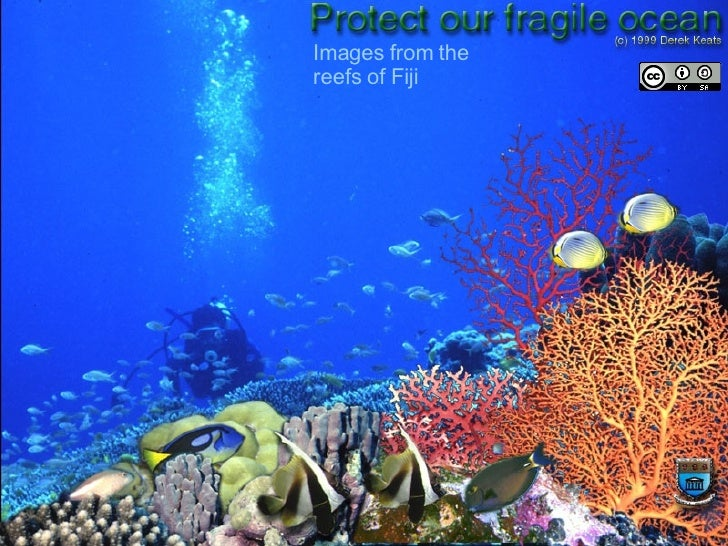 Images from the reefs of Fiji