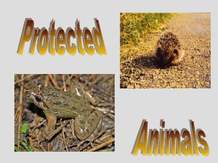 Protected Animals