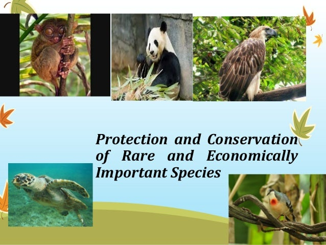 plant and animal endangered species essay Read this full essay on endangered species: animals and plants many people  have different ideas about what an endangered species is, but the definition of e.