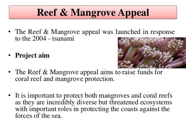 the importance of preserving coral reef and mangrove communities Seagrass and coral reef mangroves filter nutrients and  community structure of fish on neighbouring coral reefs  ¾wwwpandaorg mangrove importance.