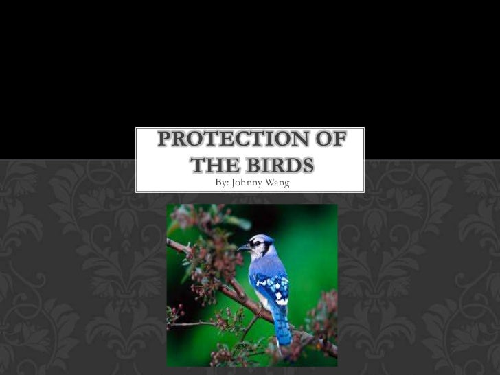 Protection of the birds<br />By: Johnny Wang<br />