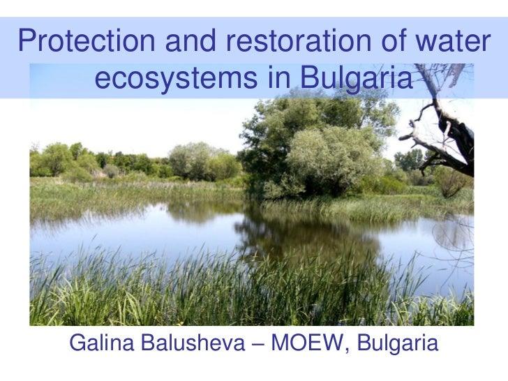 Protection and restoration of water     ecosystems in Bulgaria   Galina Balusheva – MOEW, Bulgaria