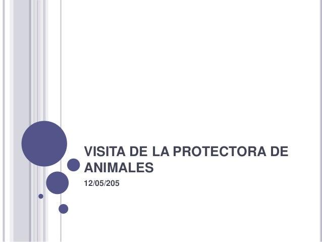 VISITA DE LA PROTECTORA DE ANIMALES 12/05/205