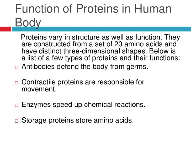 what is a proteins function