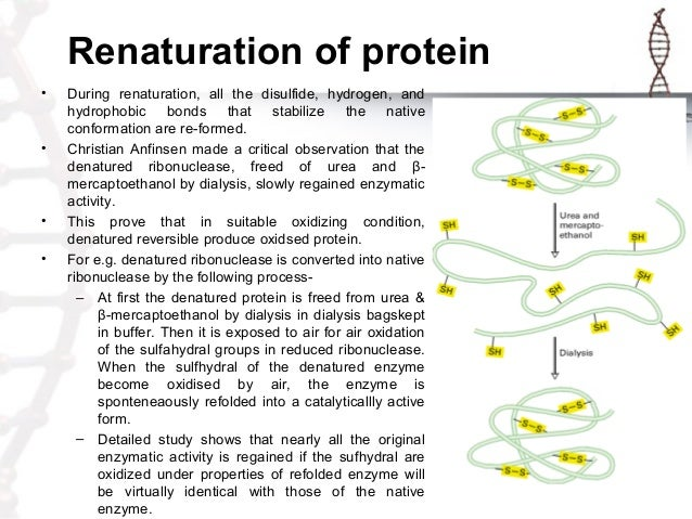 proteins experiment The objective of this protein denaturation experiment is to demonstrate the existence of proteins in biological materials such as milk (which contains the casein protein), human hair (keratin, hair protein), and.