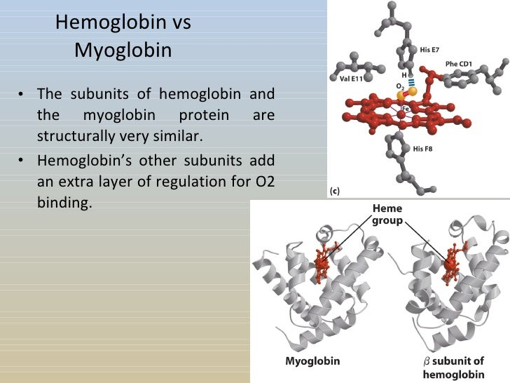 hemoglobin and myoglobin Myoglobin: hyperbolic curve tissue lung question: what if mb was a transport protein, not a storage protein hemoglobin & oxygen hemoglobin hemoglobin.