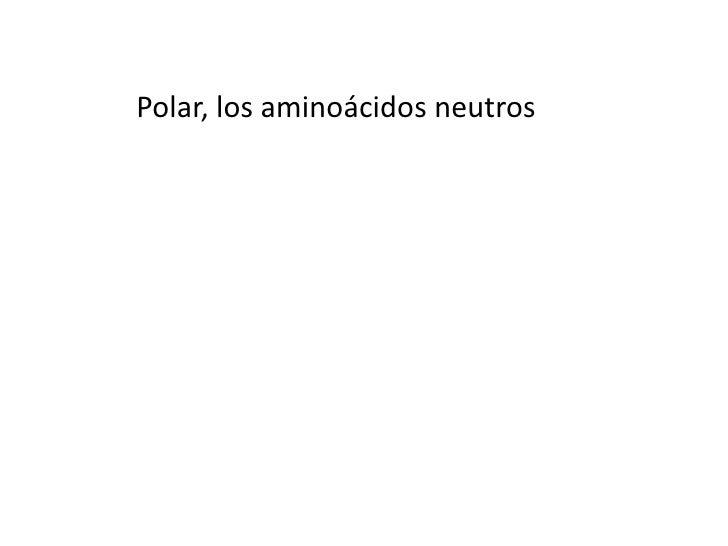 Polar, los aminoácidos neutros<br />