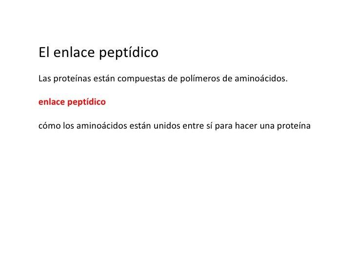 El enlace peptídico<br />Las proteínas están compuestas de polímeros de aminoácidos.<br />enlace peptídico<br />cómo los a...
