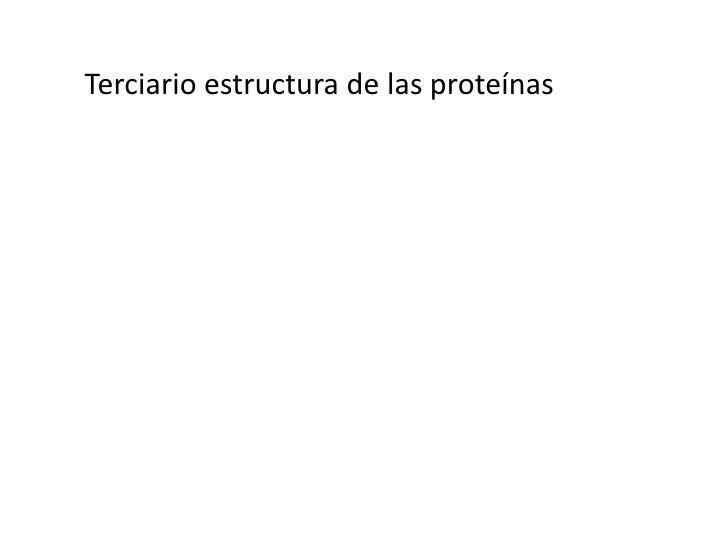 Terciario estructura de las proteínas<br />Las proteínas fibrosas<br /><ul><li>insoluble en agua