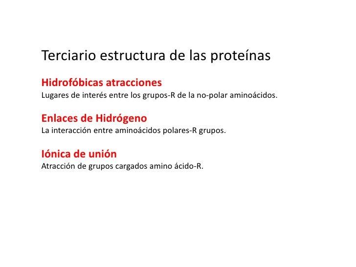 seda, el colágeno, β-queratinas</li></ul>Proteínas globulares<br /><ul><li>soluble en agua