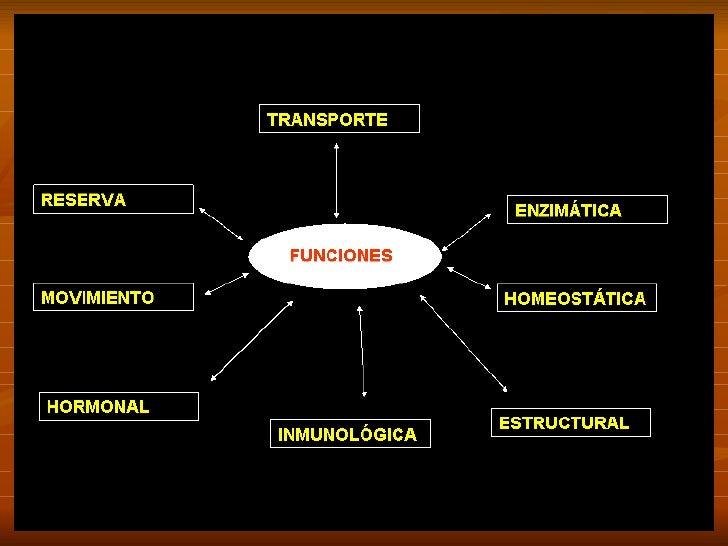 Proteinas Slide 3