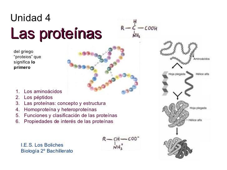 Unidad 4 Las proteínas I.E.S. Los Boliches Biología 2º Bachillerato <ul><li>Los aminoácidos </li></ul><ul><li>Los péptidos...