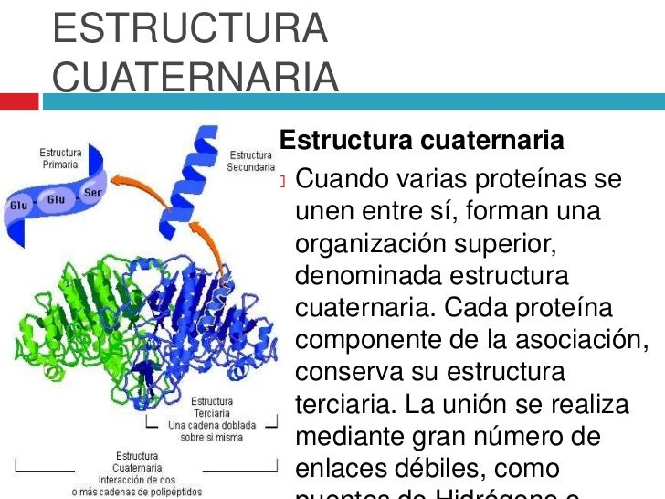 Proteinas Biocel