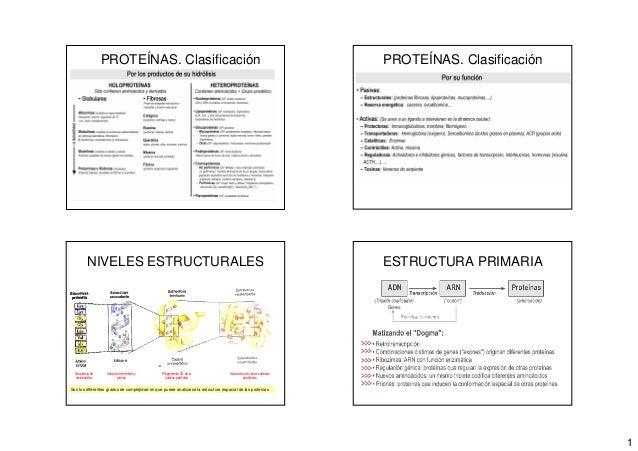 1 PROTEÍNAS. Clasificación PROTEÍNAS. Clasificación NIVELES ESTRUCTURALES Son los diferentes grados de complejidad en que ...