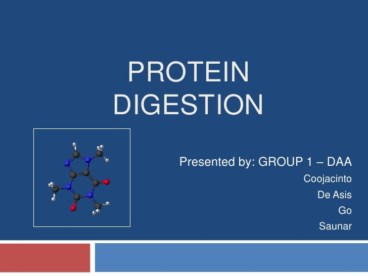 Protein Digestion<br />Presented by: GROUP 1 – DAA<br />Coojacinto<br />De Asis<br />Go<br />Saunar<br />