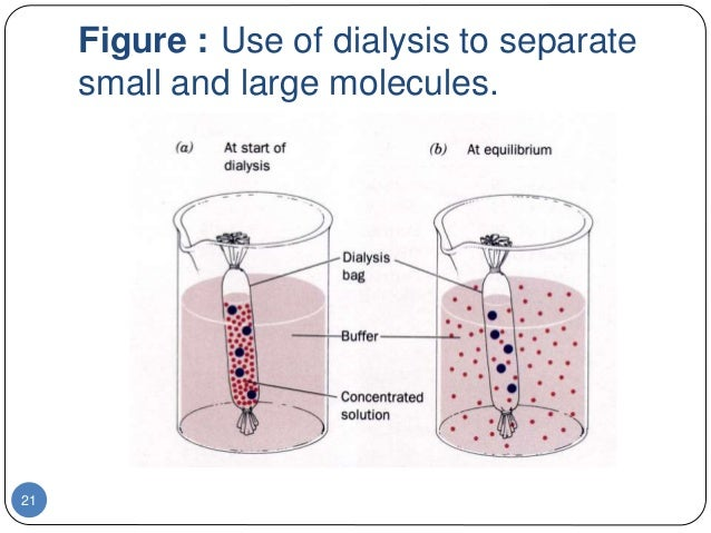 osmosis and dialysis Name_____ date_____ osmosis and dialysis – postlaboratory report in addition to the data and observations below, your report must interpret the data, with.