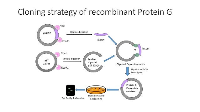 RECOMBINANT PROTEINS PDF DOWNLOAD