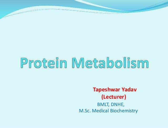 metabolism and protein a protein The present status of protein synthesis within cells has been outlined protein is formed in the absence of insulin the net formation of protein is accelerated by.