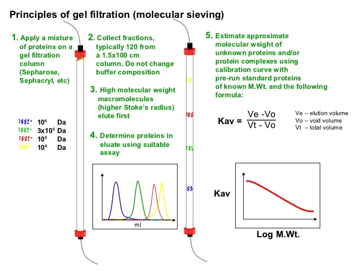 a research on proteins gel filtration chromatography and estimation of molecular weight Gel filtration - principles and methods  vch publishers inc j molecular-weight estimation of proteins using  low molecular weight gel filtration.