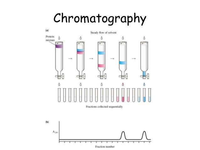 Inheritance of mitochondrial and chloroplast DNA