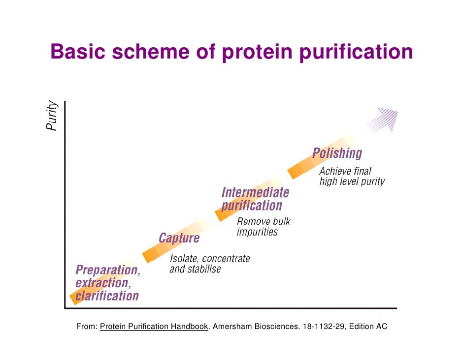 Protein Purification Hjp