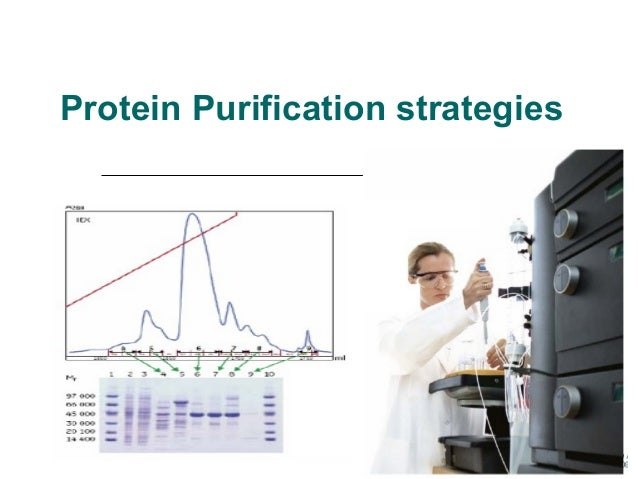 Protein Purification strategies