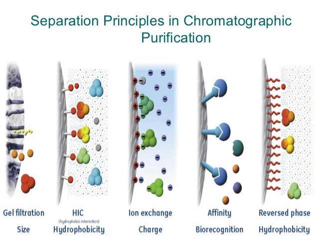 a separation and purification scheme How to isolate proteins manju kapoor  while general methods for isolation and purification of proteins are  can be used for separation of cellular proteins.