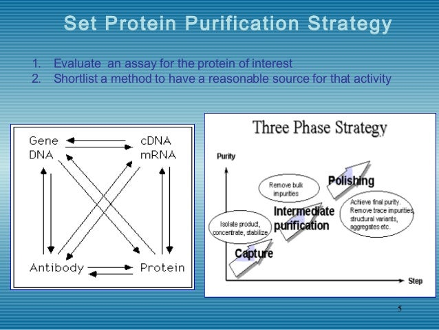 separation and purification scheme Where sufficient information has been gathered regarding the size and variation of charge with ph of the required enzyme and its major contaminants, a rational purification scheme can be devised a relatively quick analytical method for obtaining such data utilises a two-dimensional process whereby electrophoresis.