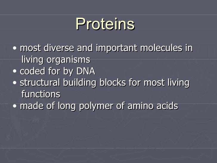 Proteins <ul><li>most diverse and important molecules in </li></ul><ul><li>living organisms </li></ul><ul><li>coded for by...