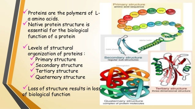 structures of proteins Designability and thermal stability of protein structures ned s wingreena, hao lib, chao tanga, anec laboratories america, inc, 4 independence way, princeton, nj 08540, usa bdepartment of biochemistry and biophysics.