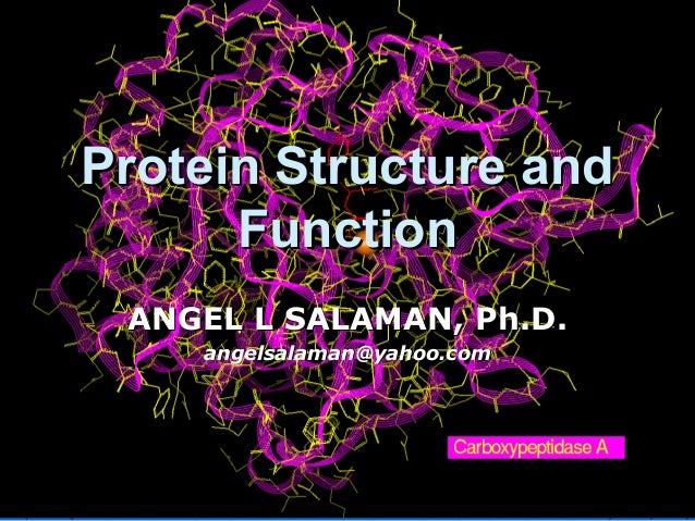 Protein Structure andProtein Structure and FunctionFunction ANGEL L SALAMAN, Ph.D.ANGEL L SALAMAN, Ph.D. angelsalaman@yaho...