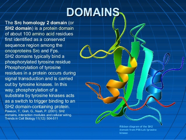 protein structure and function 26 638?cb=1398605528 protein structure and function Basic Electrical Wiring Diagrams at honlapkeszites.co