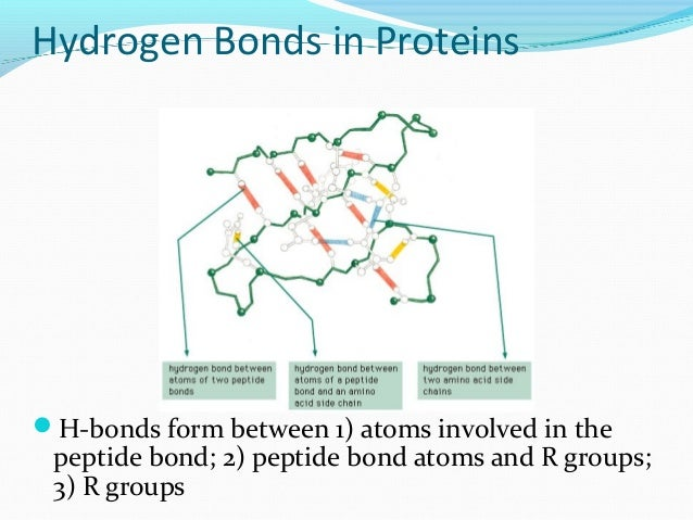 protein structure amp function