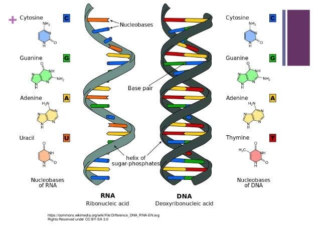 protein wiki