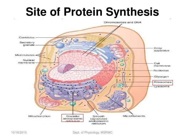 What is the importance of protein synthesis in our body statistical research paper health care costs