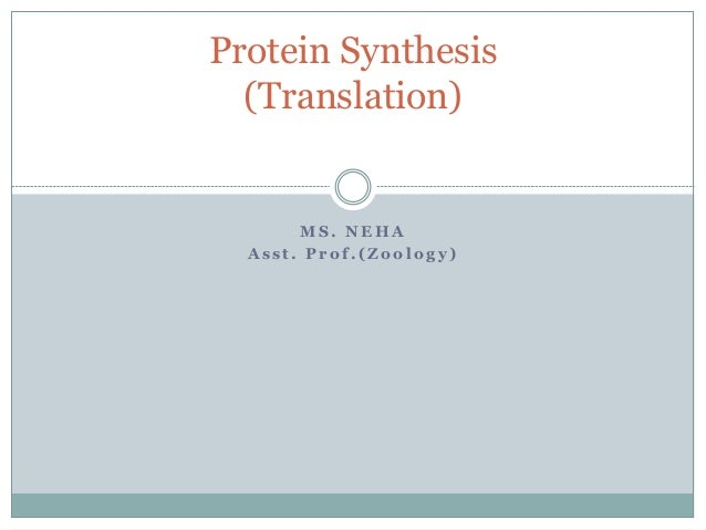 M S . N E H A A s s t . P r o f . ( Z o o l o g y ) Protein Synthesis (Translation)