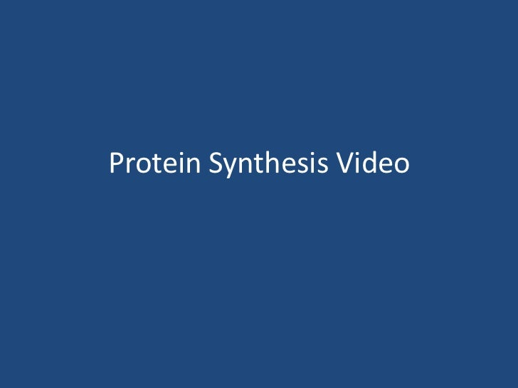 Protein Synthesis Video<br />