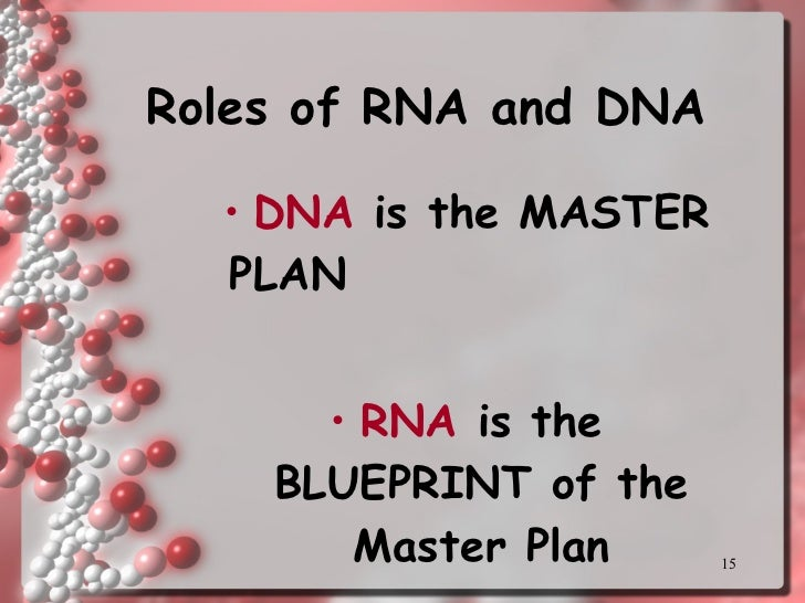 Protein synthesis with turning point rna 15 malvernweather Choice Image