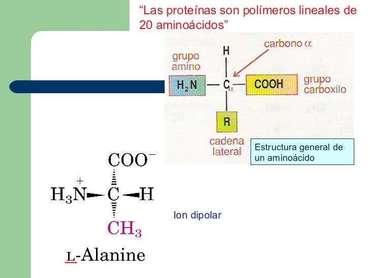 Proteínas 1ª Parte