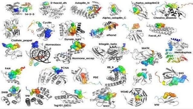AMINOÁCIDOS  Las proteínas son uno de los principales componentes de todas nuestras células. Los aminoácidos son los bloq...