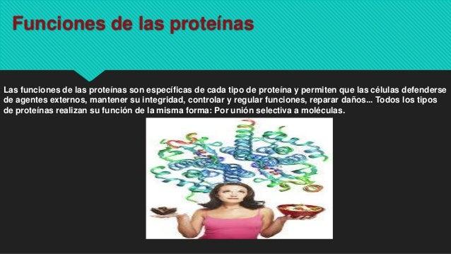 Funciones de las proteínas Las funciones de las proteínas son específicas de cada tipo de proteína y permiten que las célu...