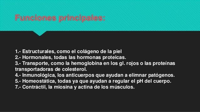 Funciones principales: 1.- Estructurales, como el colágeno de la piel 2.- Hormonales, todas las hormonas proteicas. 3.- Tr...