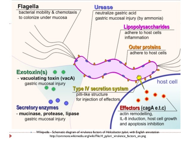 a look at bacteria and its pathogenicity About the genomic and nomenclature databases of strains of pathogenic  bacterial species are available through the institut pasteur bigsdb.