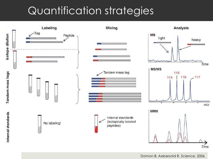 Quantification strategies Domon B, Aebersold R. Science. 2006 Isotope dilution  Tandem mass tags  Internal standards
