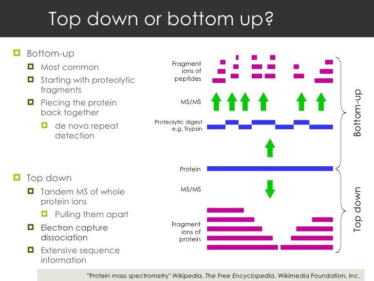 Top down or bottom up? <ul><li>Bottom-up </li></ul><ul><ul><li>Most common  </li></ul></ul><ul><ul><li>Starting with prote...
