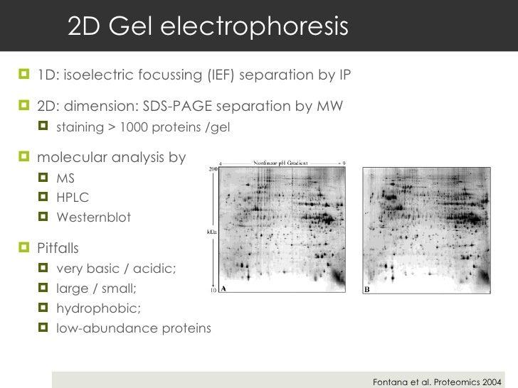2D Gel electrophoresis <ul><li>1D: isoelectric focussing (IEF) separation by IP </li></ul><ul><li>2D: dimension: SDS-PAGE ...